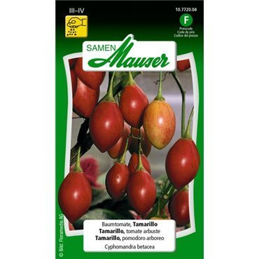 Tamarillo, tomate arbuste - Cyphomandra betacea (10772004) (Semence)