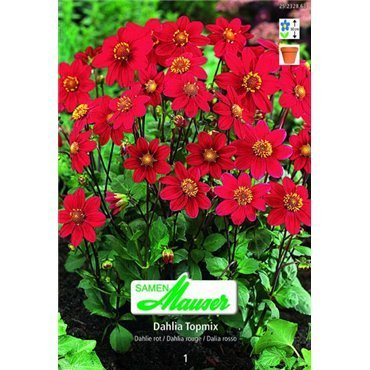 Dahlias Topmix rouge (25232863)