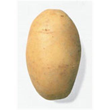 """Semenceaux de pommes de terre """"Agria"""" (10825516)(Semence)"""