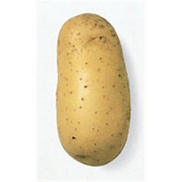 Saatkartoffel Charlotte (10823016)(Samen)