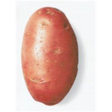 """Semenceaux de pommes de terre """"Desiree"""" (10827016)(Semence)"""