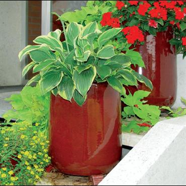 Pot Bering 86227.3.20 rouge fleurir