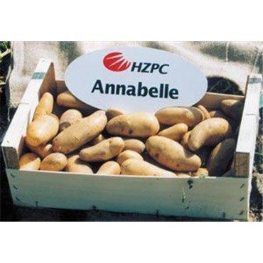 Saatkartoffel Annabelle (10823516)(Samen)