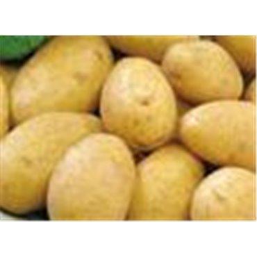 Saatkartoffel Bintje (10825016)
