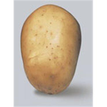Saatkartoffeln Lady Felicia (10822016)(Samen)