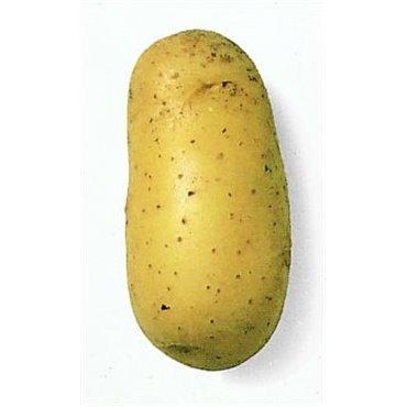 Semenceaux de pommes de terre Bio (12823016)