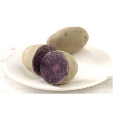 Pomme de terre Bleue de Saint Gall (10827506)(Semence)