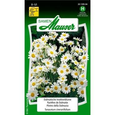 Dalmatische Insektenblume, mehrjährig - Tanacetum cinerariifolium (20139504) (Samen)