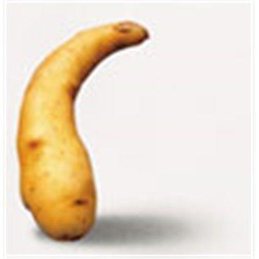 Saatkartoffel Ratte/Virgule (10824206)(Samen)