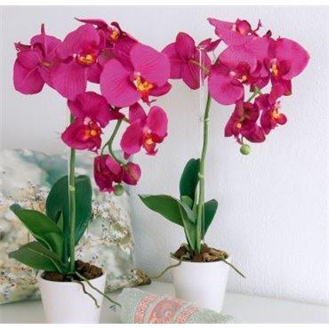 Bâton pour Orchidée