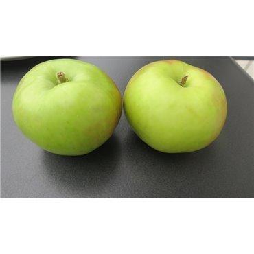 Apfel Gravenstein Rellstab BIO