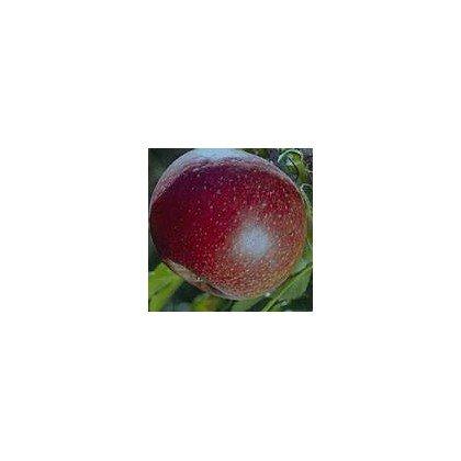 Apfel Red Spring BIO
