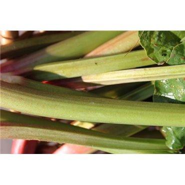 Rhubarbe Grüner Riese