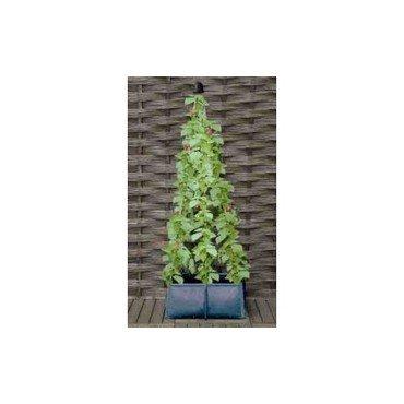 Pot pour culture d'haricots (30116801)