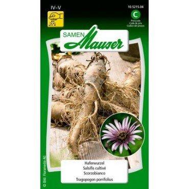 Salsifis cultivé (10521504)(Semence)