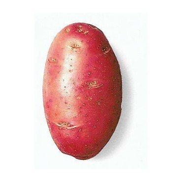 Semenceaux de pommes de terre ´Desiree´ 1 kg (10827036)