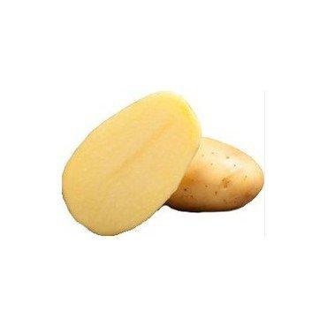 Semenceaux de pommes de terre Bio Vitabella 2.5 kg (12824016)