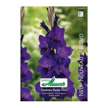 Gladiole Purple Flora (25260483)