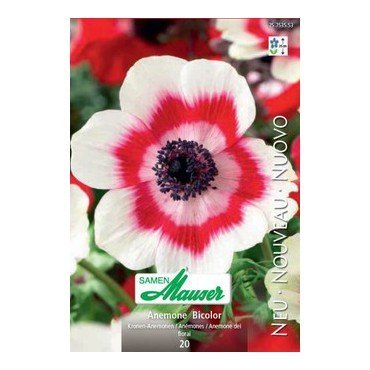 Anemonen Bicolor )25753553)
