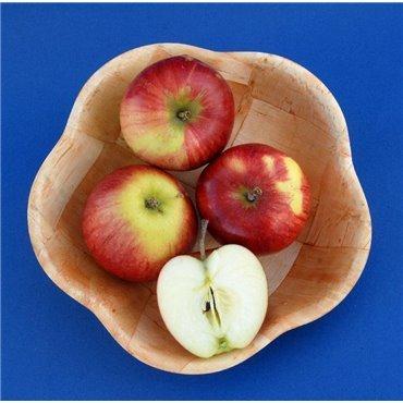 Apfel Retina