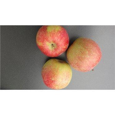 Apfel Summerred