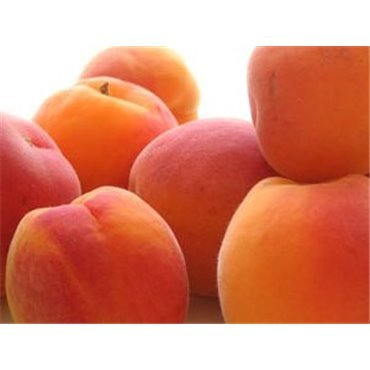 Abricot Sucré d'Holub *
