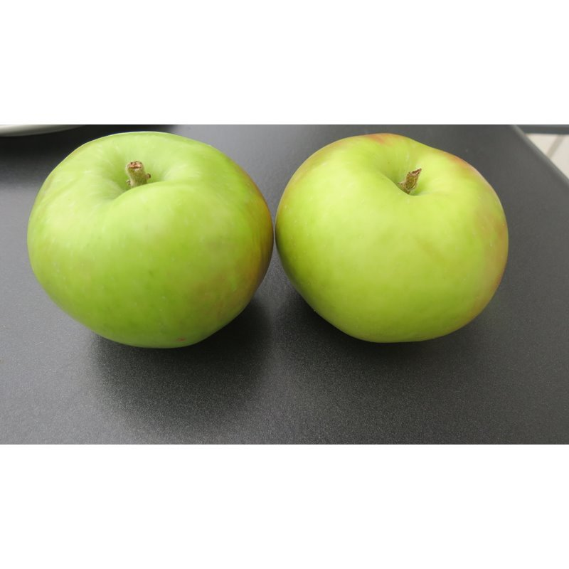 Apfel Gravenstein Rellstab