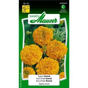 Sammetblume Hawaii (20563404)(Samen)