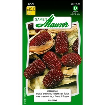 Erdbeermais (20651004)(Samen)