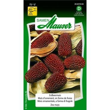 Maïs d'ornement, en forme de fraise (20651004)(Semence)