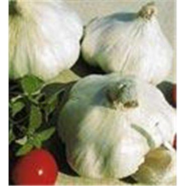 Knoblauch Herbst 250 g 10802516(Samen)