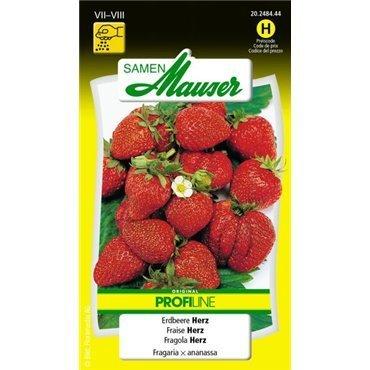 Erdbeere (20248444)(Samen)