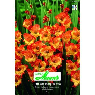 Gladiolen Princess Margret Rose (25258423)