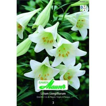 Osterlilie (25053413)