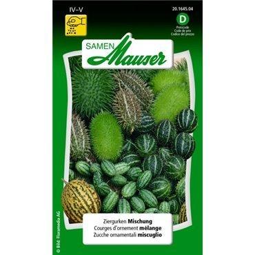 Coloquintes mélange (20164504)(Semence)