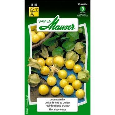 Ananaskirsche (10660504)(Samen)