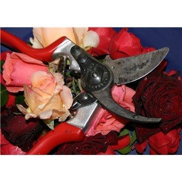 Schnittkurs für Rosen